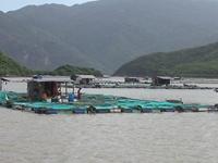 Khánh Hoà tập trung triển khai 4 chương trình phát triển kinh tế