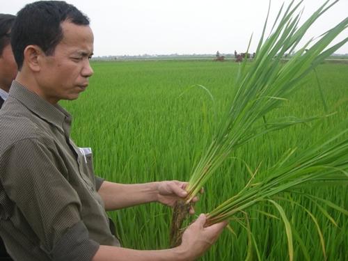 Nâng cao năng lực cạnh tranh xuất khẩu gạo