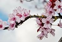 Những loài hoa được ưa thích trong ngày Tết
