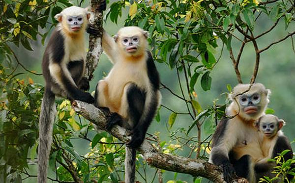 Hà Giang: Qui hoạch bảo tồn 05 khu rừng đặc dụng
