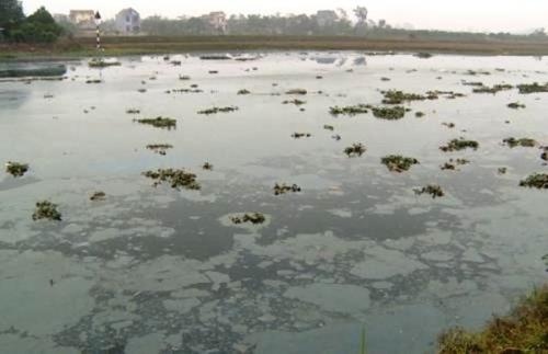 Sông Cửu An ô nhiễm nặng