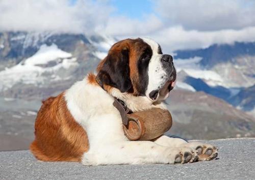 Một số giống chó nổi tiếng trên thế giới
