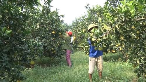 Khởi sắc nông nghiệp Hưng Yên