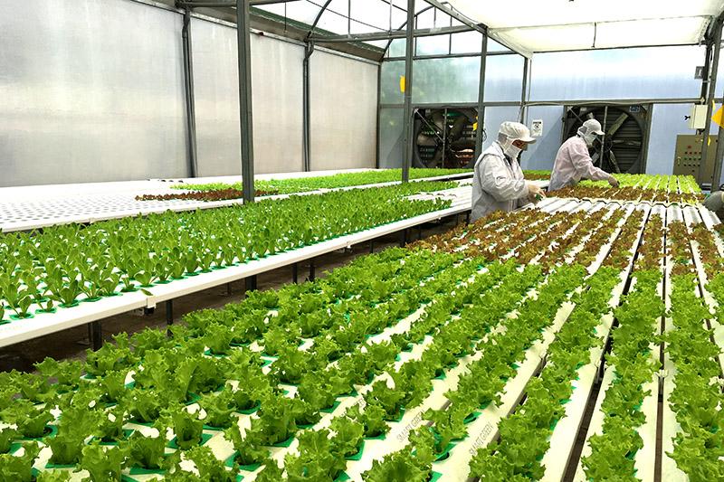 Ứng dụng nông nghiệp 4 0 vào sản xuất nông nghiệp ở Đồng bằng sông Cửu Long