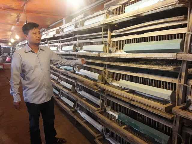 Vĩnh Phúc Hướng đi hiệu quả từ mô hình trang trại nuôi chim cút