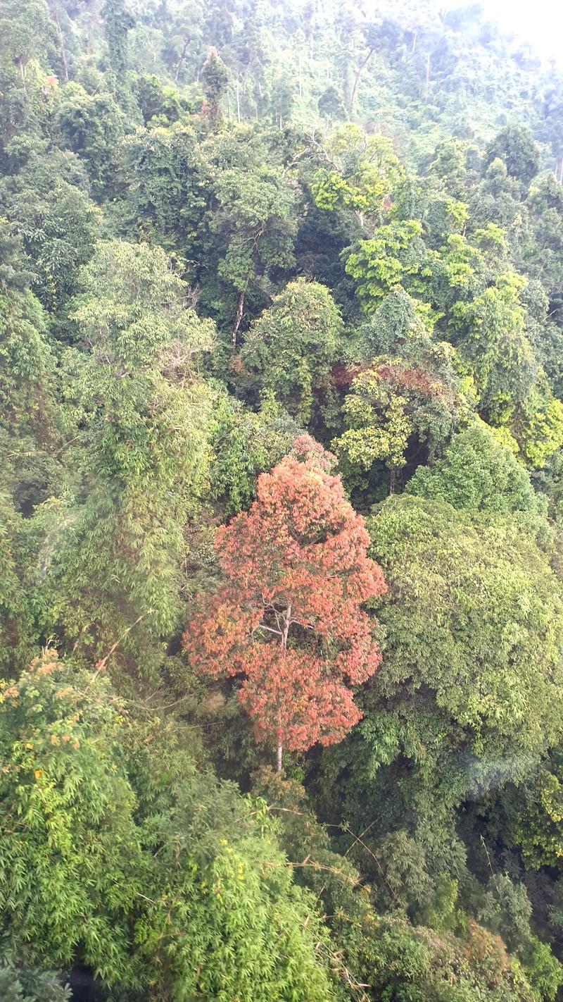 Đắk Lắk tăng cường chủ động phòng chống cháy rừng trong mùa khô 2019