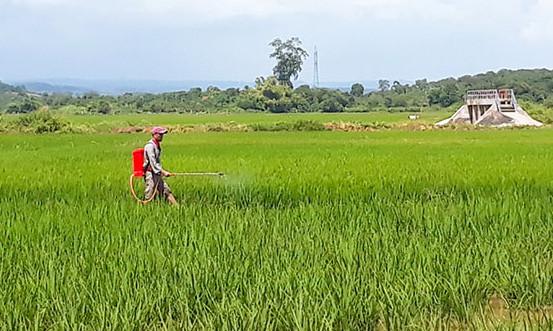 Hiệu quả từ dự án giảm nghèo Tây Nguyên tại tỉnh Đắk Nông