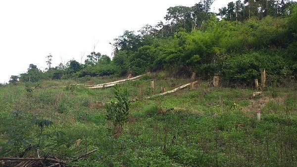 Đắk Nông tăng cường bảo vệ rừng trong mùa khô 2019