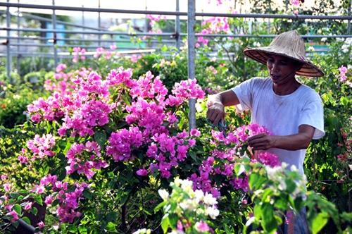 Văn Giang đổi thay từ nghề trồng hoa, cây cảnh