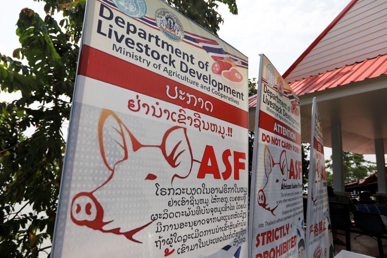 Thái Lan đặt báo động tại 24 tỉnh, thành về dịch tả lợn châu Phi