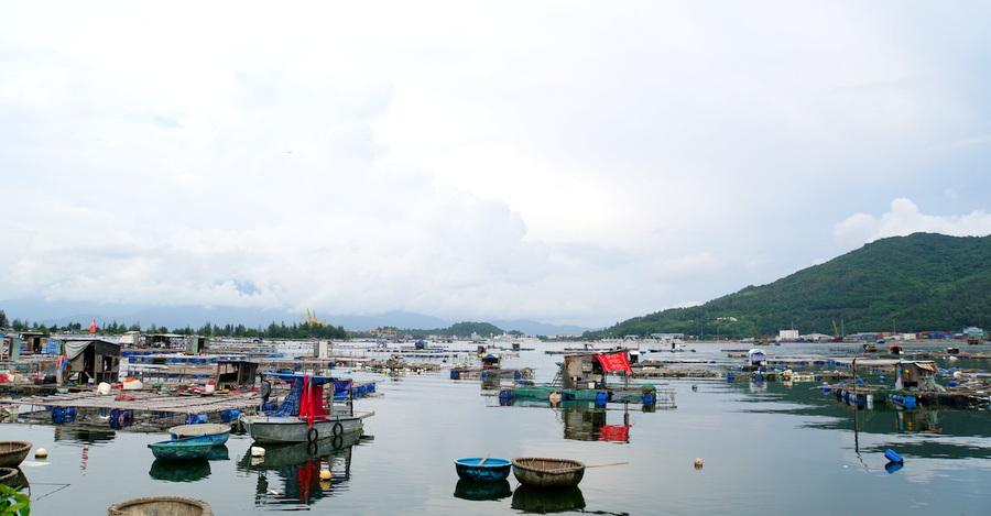 Ngày mới ở làng cá Mân Quang