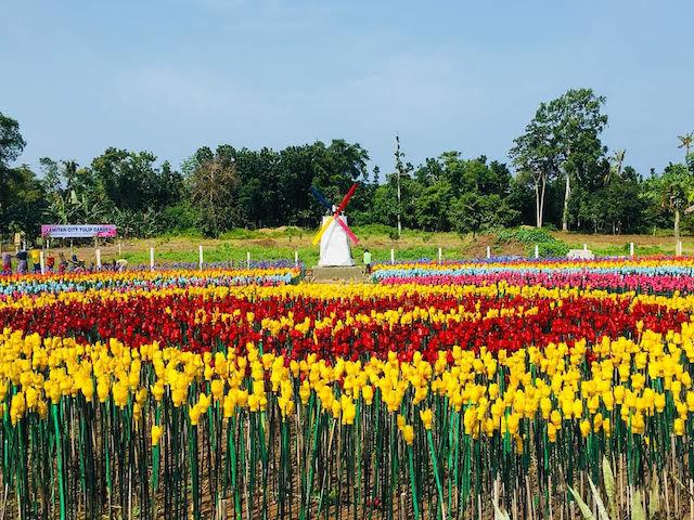 Làm vườn hoa từ rác thải nhựa tại Philippines