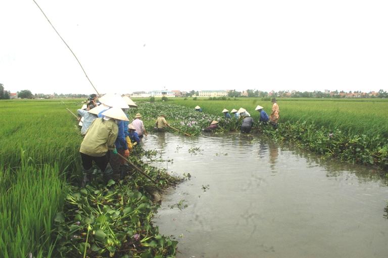 Phòng chống ngập ngập, úng cho cây trồng do ảnh hưởng của mưa lớn