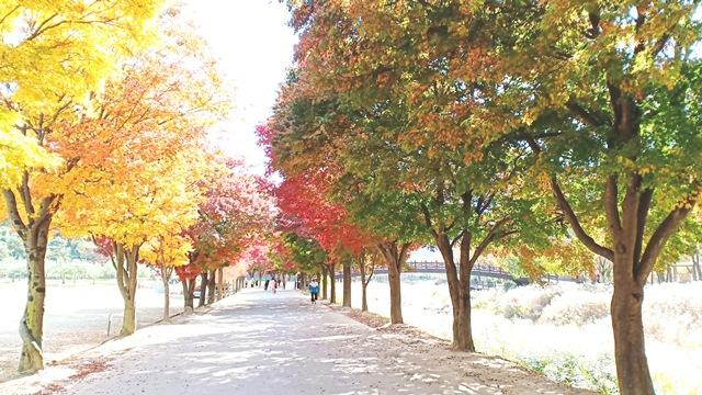 Đắm say cùng mùa thu Hàn Quốc