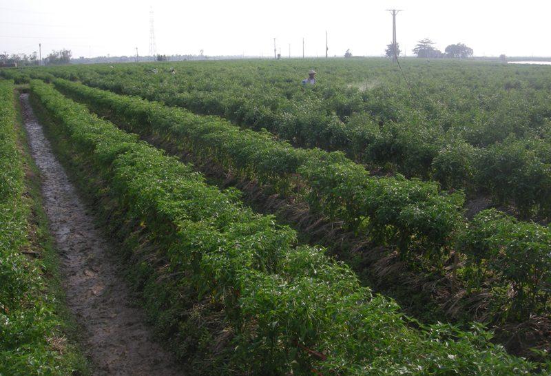 """Thái Bình nỗ lực """"cởi trói"""" cho nông nghiệp phát triển"""