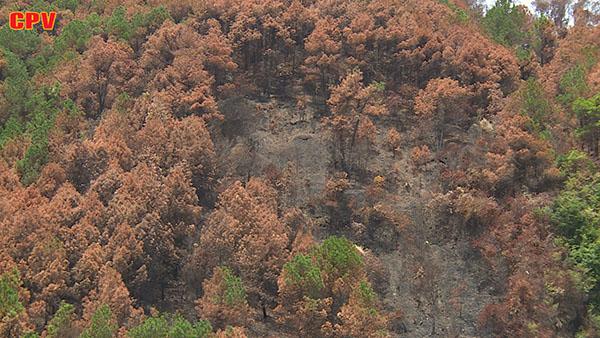 Hà Tĩnh kịp thời khắc phục hậu quả cháy rừng