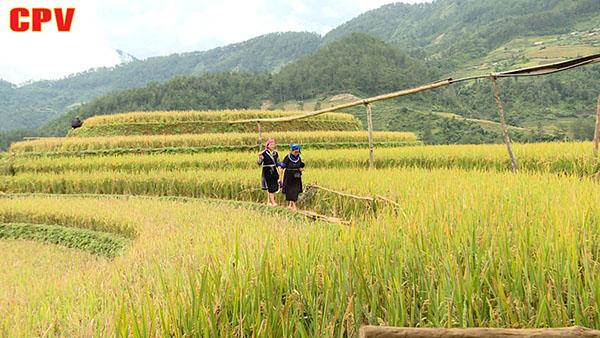 Nông thôn miền núi phát triển vượt bậc sau 10 năm xây dựng nông thôn mới