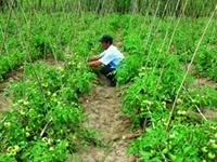Phú Yên Tập trung thực hiện các giải pháp giảm nghèo ở vùng nông thôn, miền núi