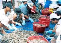 Xuất khẩu tôm Việt Nam Vượt khó, tạo đà phát triển