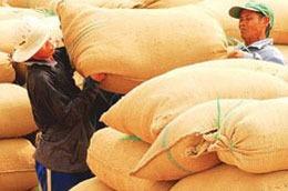 Đầu năm 2010 Đã ký hợp đồng xuất bán 2,38 triệu tấn gạo