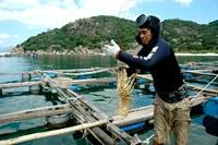Nghề nuôi tôm hùm ở đảo Bình Ba