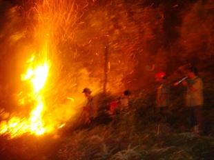 Cháy rừng nghiêm trọng ở nhiều nơi