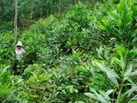 Dự án hỗ trợ người dân trồng rừng thay thế nương rẫy ở Lạng Sơn hợp với lòng dân