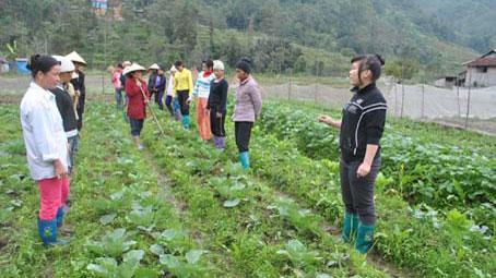 Gần 59 000 lao động nông thôn Hà Giang được hỗ trợ đào tạo nghề theo Đề án 1956