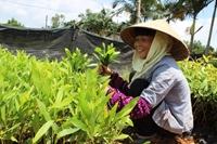 Nông nghiệp và tác động sau gia nhập TPP