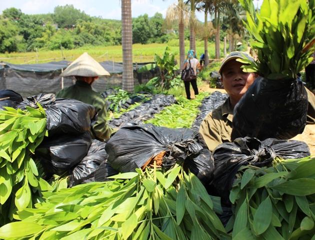 Tăng cường liên kết, đồng bộ quy hoạch, rà soát đất đai nâng cao hiệu quả các nông lâm trường