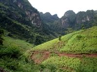 Vi phạm về chi trả dịch vụ môi trường rừng bị phạt tới 50 triệu đồng