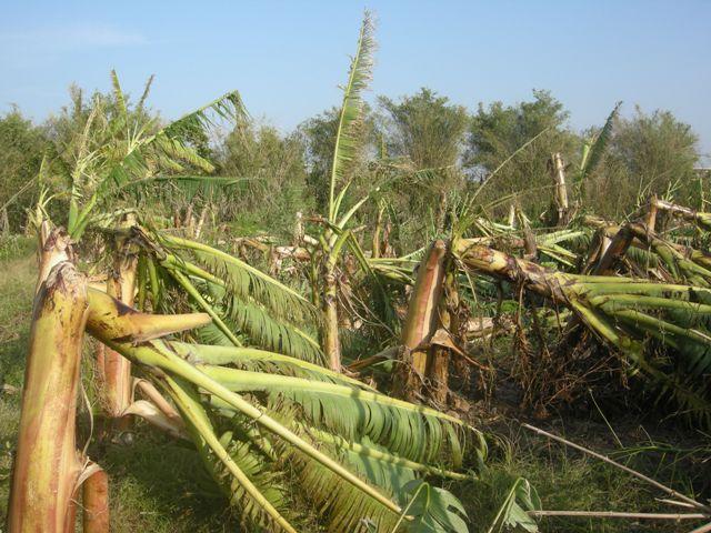 WB đánh giá cao công tác chống biến đổi khí hậu của Việt Nam