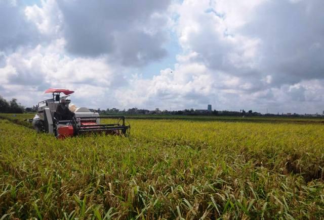 Nâng cao hiệu quả ứng dụng khoa học công nghệ, tăng sức cạnh tranh cho hàng nông sản
