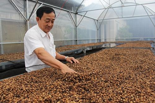 Đắk Lắk Thúc đẩy các giải pháp nâng cao chất lượng cà phê chế biến
