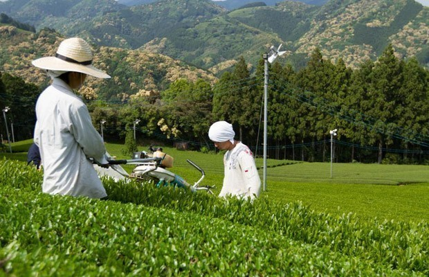 Nhật Bản thông qua dự luật thúc đẩy xuất khẩu nông sản