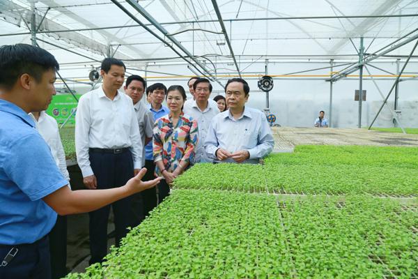 Vĩnh Phúc Khuyến khích doanh nghiệp đầu tư vào nông nghiệp