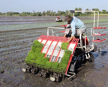 Kiên Giang Tập trung triển khai đề án tái cơ cấu ngành nông nghiệp 