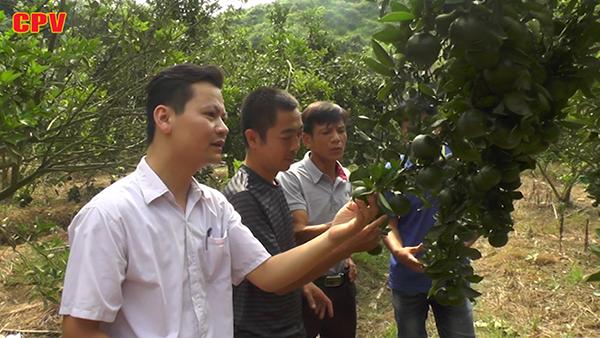 Hàm Yên Tuyên Quang  Thoát nghèo, vươn lên làm giàu từ cây ăn quả