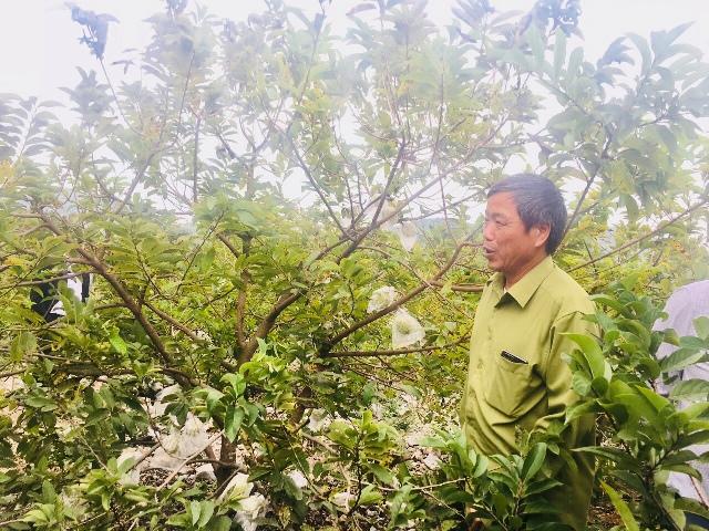 Sản xuất nông, lâm nghiệp và thủy sản tiếp tục giữ đà tăng trưởng
