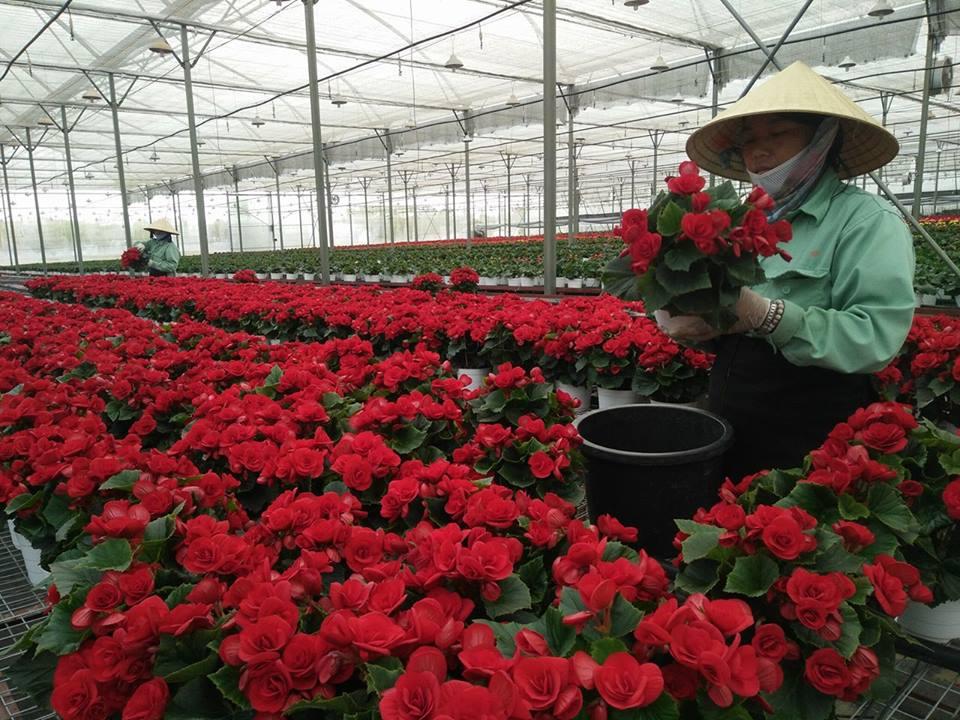 Lập Thạch Vĩnh Phúc  Sản xuất nông nghiệp theo hướng chuyển đổi cơ cấu cây trồng, vật nuôi