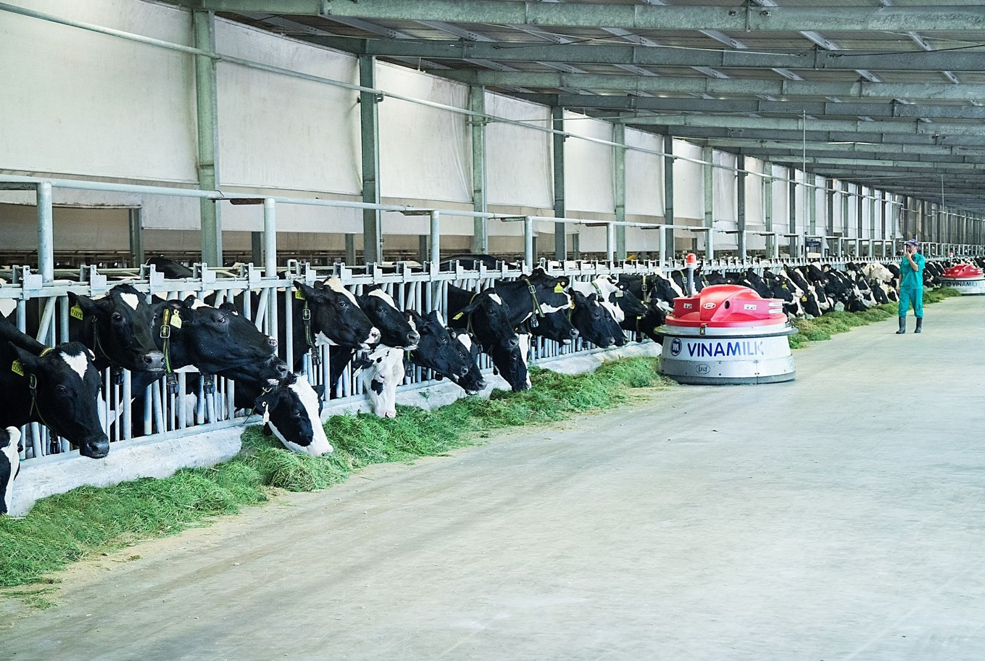 Tây Ninh phát triển thế mạnh chăn nuôi bò sữa