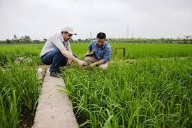 Vĩnh Phúc Phê duyệt Chương trình khuyến nông Vĩnh Phúc giai đoạn 2020 – 2025