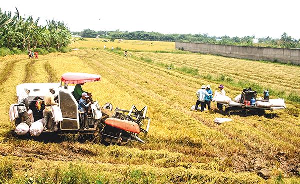 Cần Thơ Hiệu quả từ đưa cơ giới hóa vào sản xuất nông nghiệp