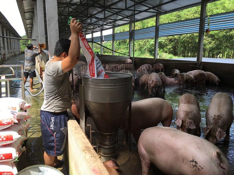 Tăng cường phối hợp bình ổn thị trường thịt lợn
