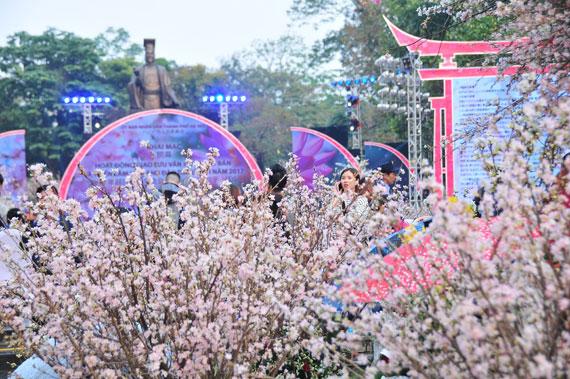 Hà Nội tìm phương pháp thuần dưỡng hoa anh đào Nhật Bản