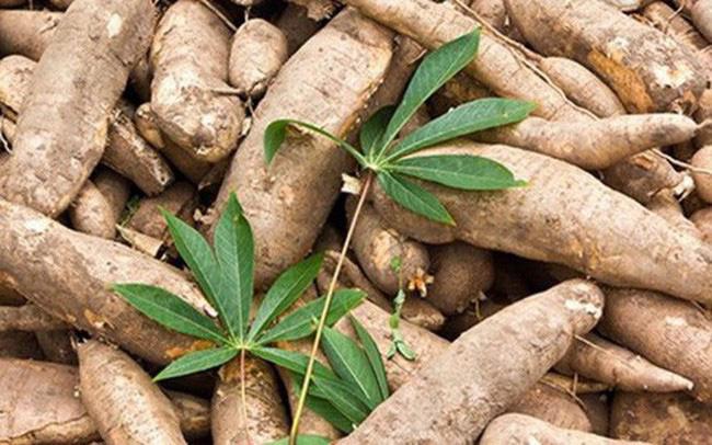 Kim ngạch xuất khẩu sắn tăng hơn 118