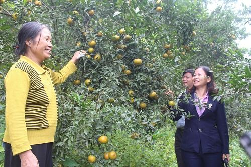 Lục Yên phát huy hiệu quả Quỹ hỗ trợ nông dân