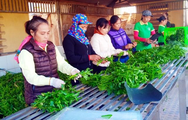 Vĩnh Phúc Chính sách hỗ trợ hợp lý, nông dân hăng hái làm giàu