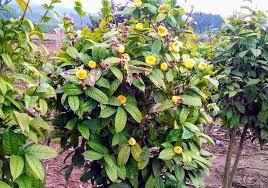 Cấp giấy chứng nhận sản phẩm công nghiệp nông thôn tiêu biểu tỉnh Vĩnh Phúc năm 2019 cho 8 sản phẩm
