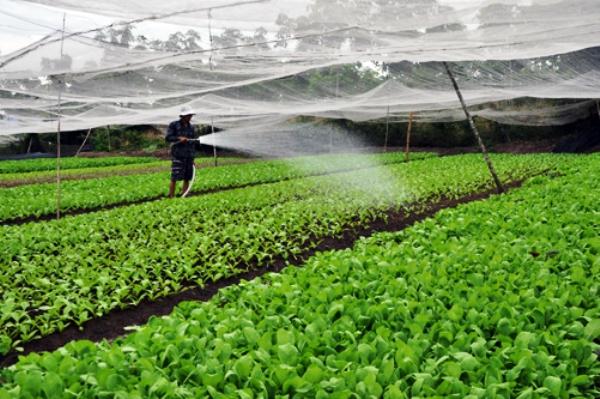 Vĩnh Phúc phát triển ngành nông nghiệp theo hướng bền vững